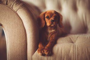 Pravidelné strihanie psov je dôležité