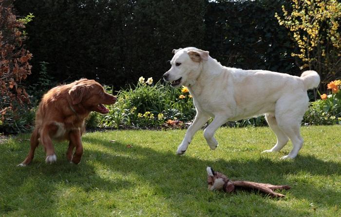 Wc pre psa si zaslúži pozornosť